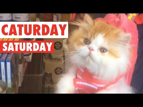 Caturday Saturday Cats Video Compilation 2016