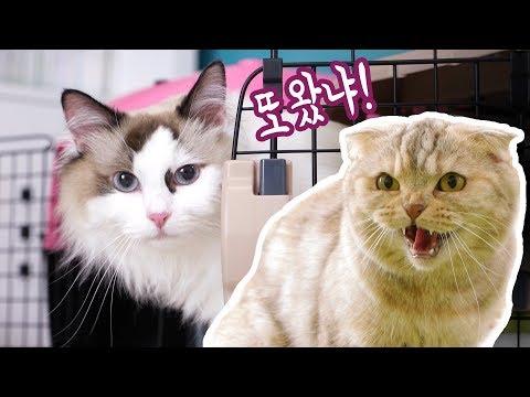 치순이를 일년만에 본 고양이들 과연 알아볼까?! 치순이와 콩