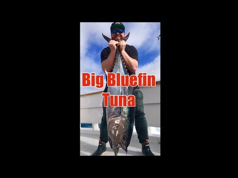 Liberty Sportfishing Big Bluefin Tuna San Diego