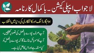 Amazing App for Farmers ● How to Use Plantix App ● Nukta Guidance