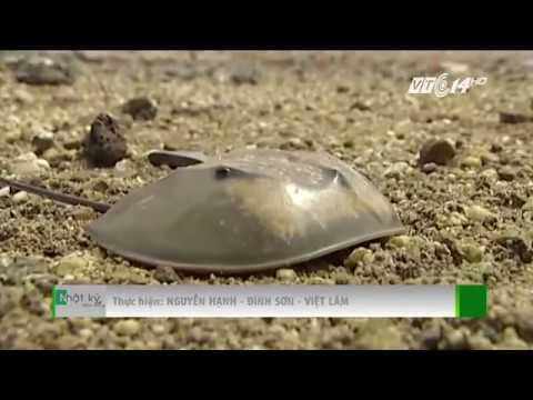 VTC14 | Ăn so biển: Cái chết được báo trước