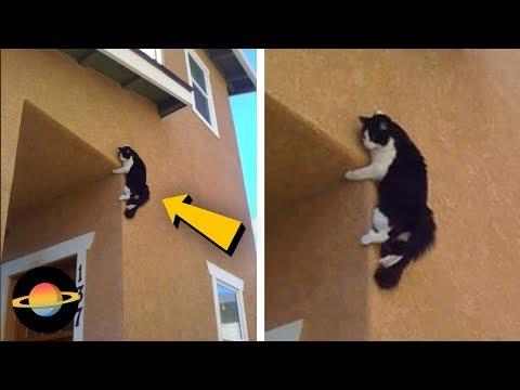 10 kotów, które utknęły w dziwnych miejscach