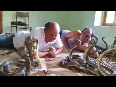 Alisher Yarmatov playing with cobra snakes
