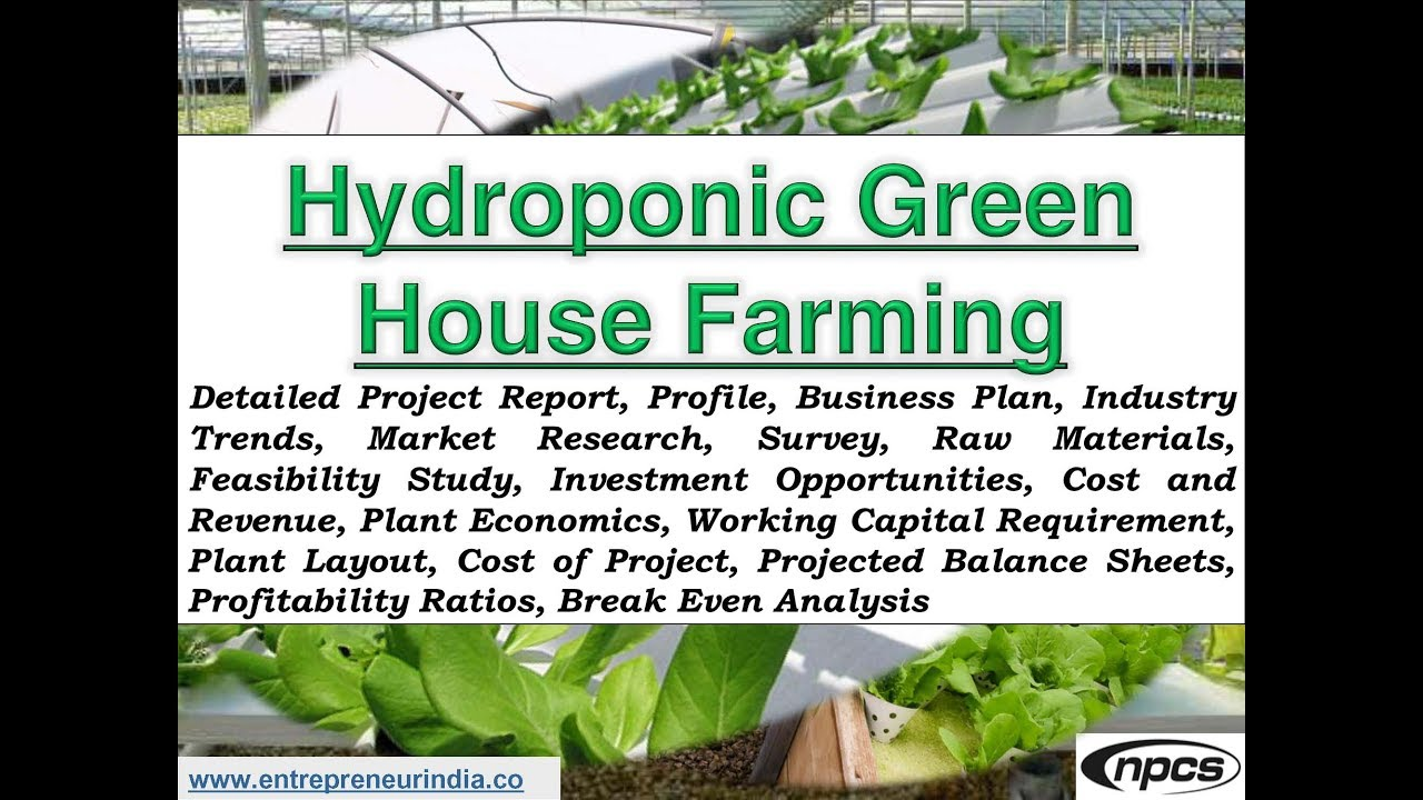 Commercial Hydroponic Greenhouse Farming  Profitable Hydroponics Project