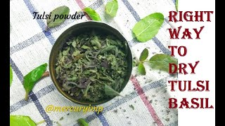 How to Make Tulsi Powder at Home:Best Way to Dry Basil Leaves
