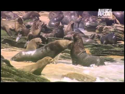 Discovery Channel ANIMAL PLANET SPOT