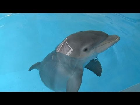 Baby Dolphin Meets Family Who Rescued Him Youtube