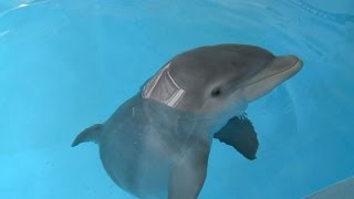 Baby Dolphin Meets Family Who Rescued Him