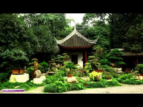 Japanese Music | Bonsai Tree Garden | Relaxing Japanese Harp Music