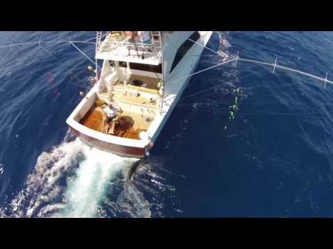 High Cotton Sportfishing