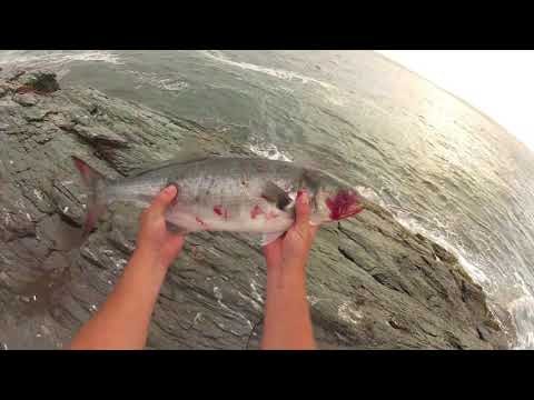 Crushing Big Bloody Bluefish, Stripers And Fluke From The Rocks. Shore Fishing Rhode Island