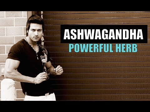 ASHWAGANDHA (अश्वगंधा) Powerful Herb - Does it Boost Testosterone or Not? Info by Guru  Mann