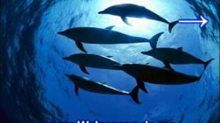 Unterwasser Musik - Entspannungsmusik Unterwasser - Unter Wasser Musik Wale Gesang
