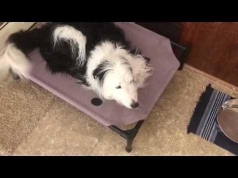 Dog Uses CBD for Anxiety   Flash Dog Training, LLC.