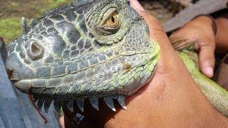 REPTILE SUPER SHOW 2013- World's Best Reptile EXPO