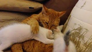 落とされた続きです。 けん玉2匹が揃いました。 妹猫タマは下に落とさ...