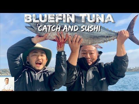 THOUSANDS BLUEFIN TUNA: Way Too Fresh | Catch And Sushi