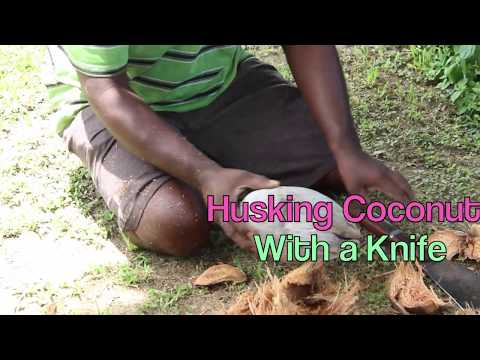 How to Husk Coconut with a Knife   That Fiji Taste