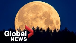 NASA finds definitive evidence of water on the moon's surface