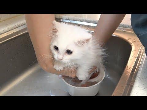 부서질 것 같은 아기 고양이 목욕 [크림목욕탕]