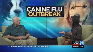 Canine Flu Outbreak Hits Chicago