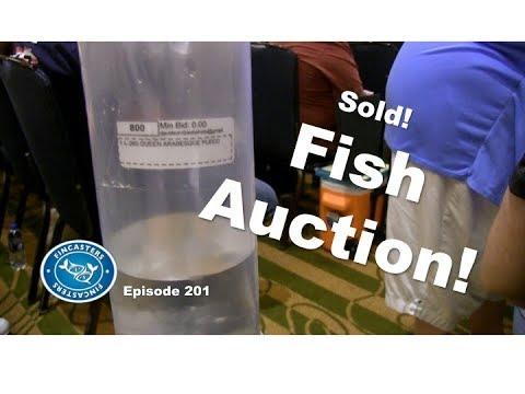 Aquarium Fish Auction! | Episode 202