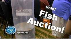 Aquarium Fish Auction! | Episode 202