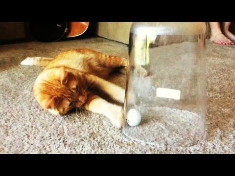 Genius Cat (Silly Boo) / 天才ネコ、経験して学ぶ(シリーなブー)