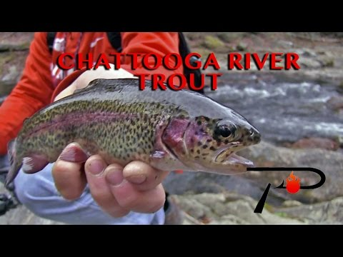 Border Fishing: Chattooga River Trout