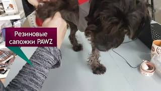 Сапожки PAWZ для собак