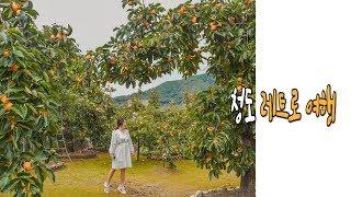 [국내여행 브이로그] 경북 청도 가볼만한곳: 유천마을/…