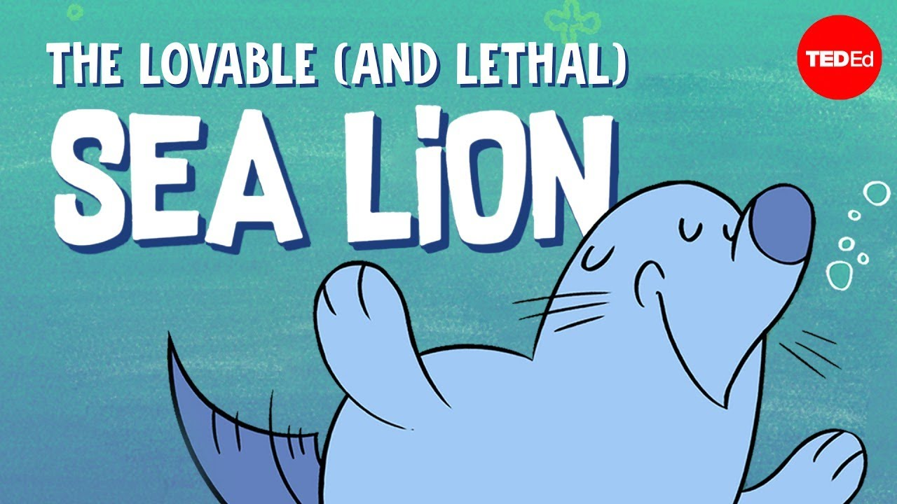 The lovable (and lethal) sea lion - Claire Simeone