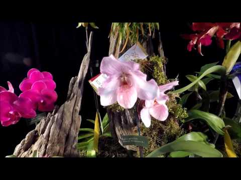 1. Orchid show OrchidFête 2016 by ECOS - Ottawa Orchid Society display