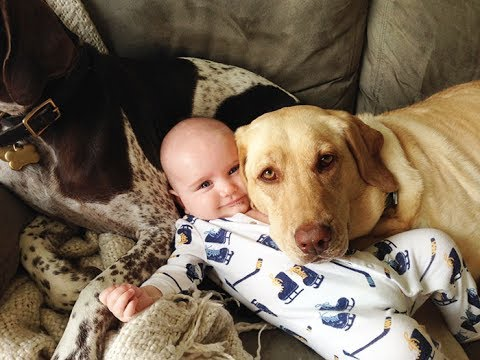 Loyal Dogs Take Care And Protecting Babies Compilation Dog And
