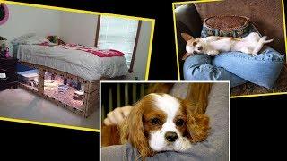 Diy Furniture: DIY Dog Beds