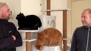 愛猫ギネスと窓拭きおじさん(ギネスの夢が叶った日)