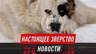 В Петропавловске пёс едва не загрыз своих хозяев