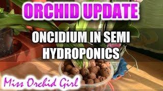 Orchids in semi hydroponics - Update 1
