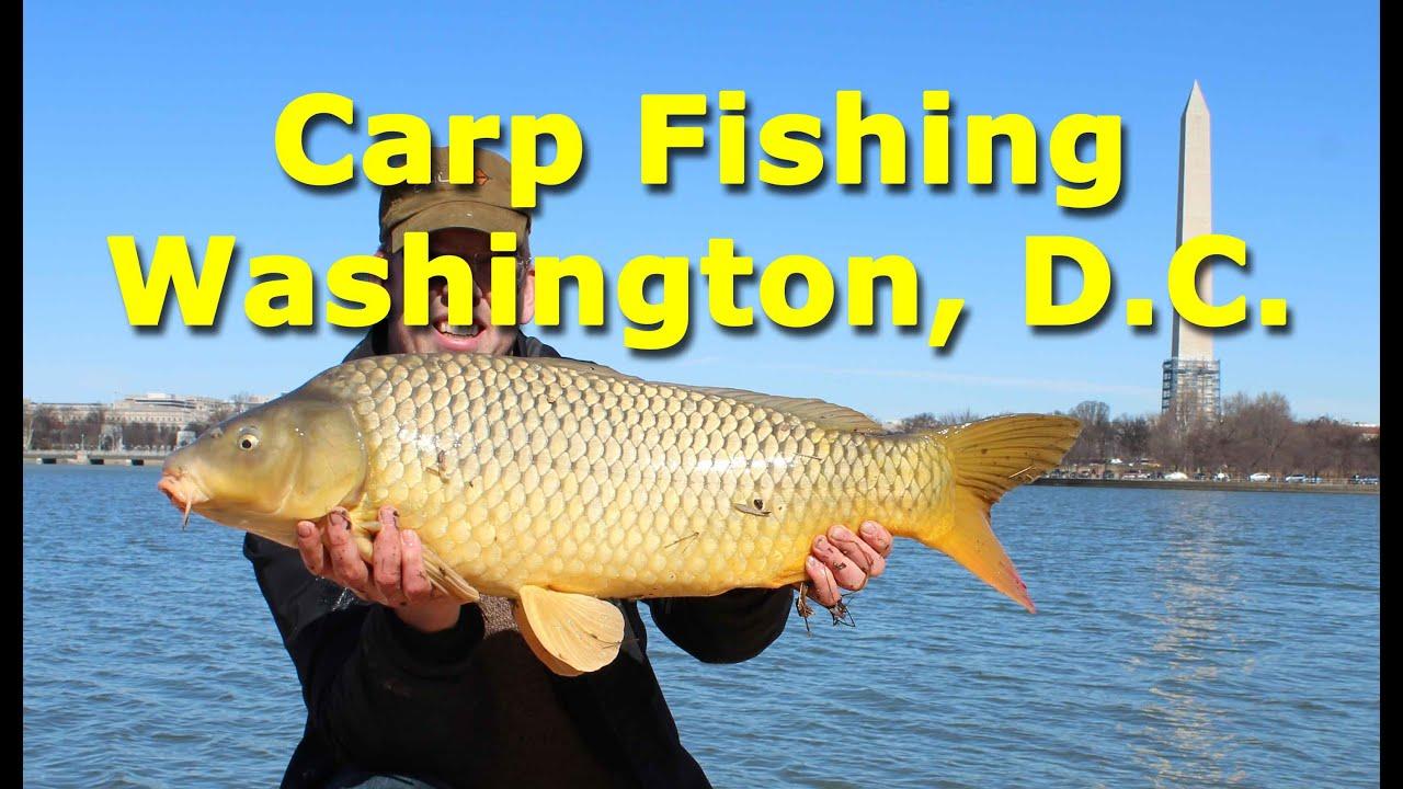 Carp fishing in washington d c usa youtube for Usa fishing report