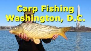 Carp Fishing in Washington, D.C. USA