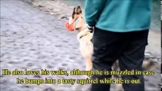 Dogs Trust Newbury: Remy