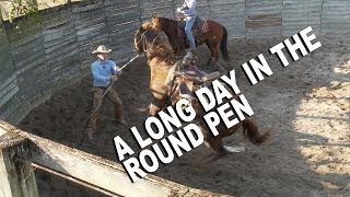 A Long Day at the Round Pen  Episode 10
