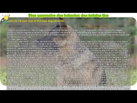 how-to-:-stop-aggressive-dog-behavior:-dog-training-tips