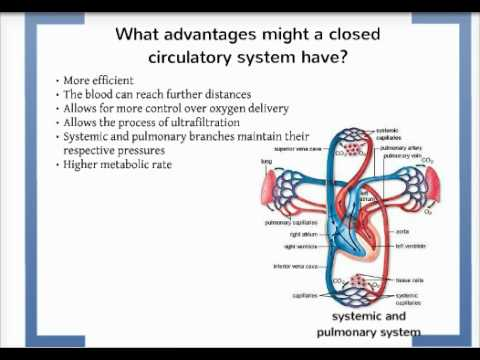 What advantage might a closed circulatory system have over an open what advantage might a closed circulatory system have over an open circulatory system ccuart Gallery