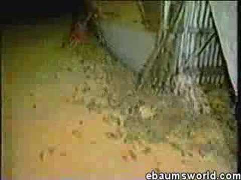Re: Rats run wild in NYC KFC/Taco Bell restaurant