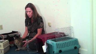 Selecting the Best Cat Carrier