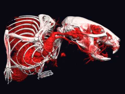 Preclinical CT Imaging of Angiogenesis