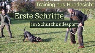 """Erste Schritte im Schutzhundesport - Wird der Hund """"scharf"""" gemacht?"""