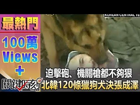 迫擊砲,機關槍都不夠狠 北韓120條獵狗「犬決」張成澤!1021213-4 - YouTube