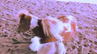 Poodle And Horse Go Jumping (funny Video)